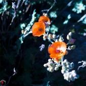 Pastel Flower 2