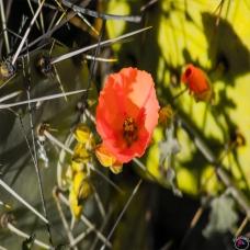Pastel Flower 3