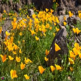 Pastel Picacho Peak 5