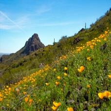 Pastel Picacho Peak Slant