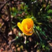 Pastel Wild Flowe