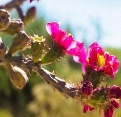Experimental Sabino Flower