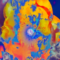 Experimental Yellow Flower